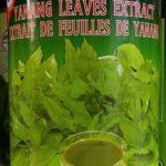 Extrait de feuilles de Yanang