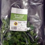 Flat Leaf Parsley