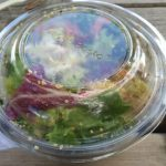 Salade Crous Bowl